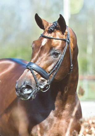 stor hest pik